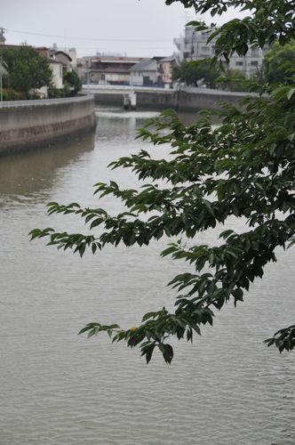 呑川.jpg