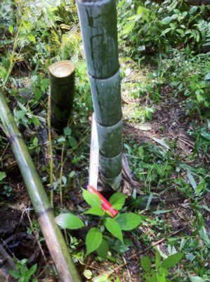 竹林0.jpg