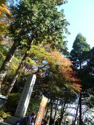 緑と紅葉.jpg