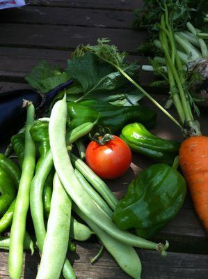 野菜の収穫.jpg