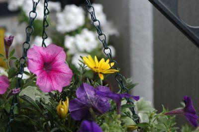 FLOWER-628.jpg